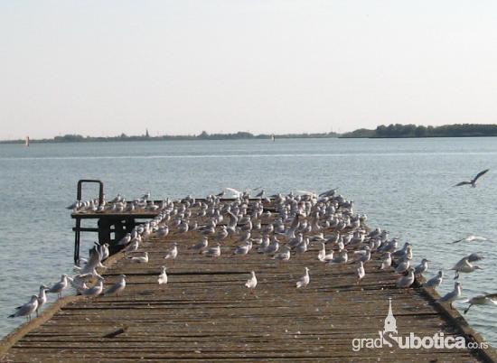 palicko-jezero2